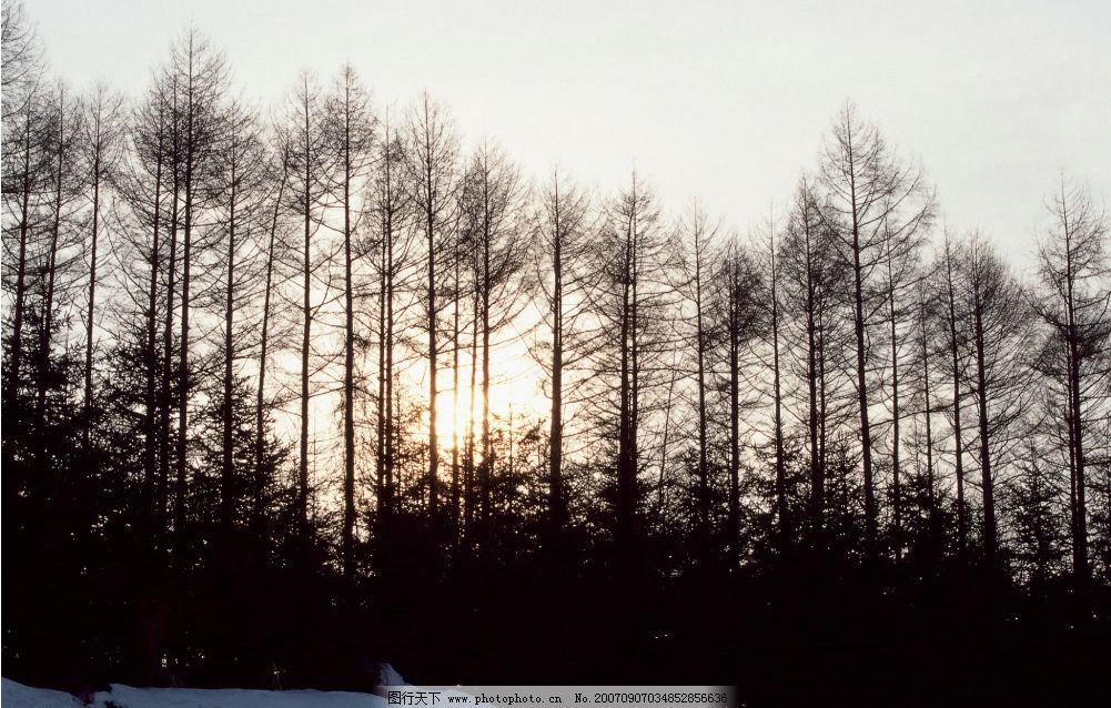 阳光 雪地 树木 大雪 雪景 树林 树林图片 树木图片 自然景观 自然
