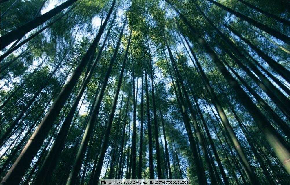 竹林 竹子 毛竹 竹子图片 竹子素材 竹子壁纸 其他生物 竹子竹林
