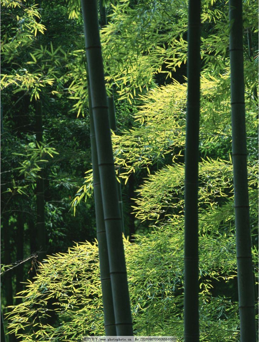 壁纸 风景 植物 桌面 854_1127 竖版 竖屏 手机