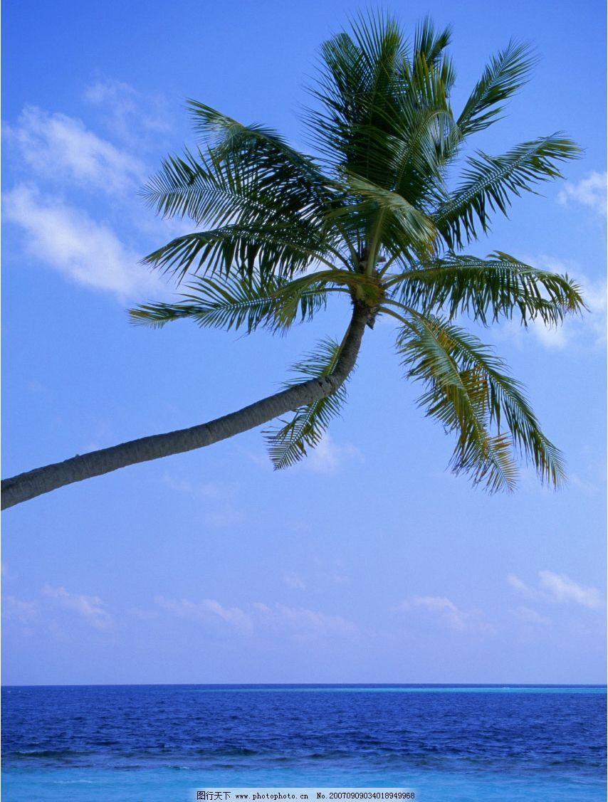 椰子树大海 海洋 海水 大海的图片 大海照片 大海景色 摄影 旅游摄影