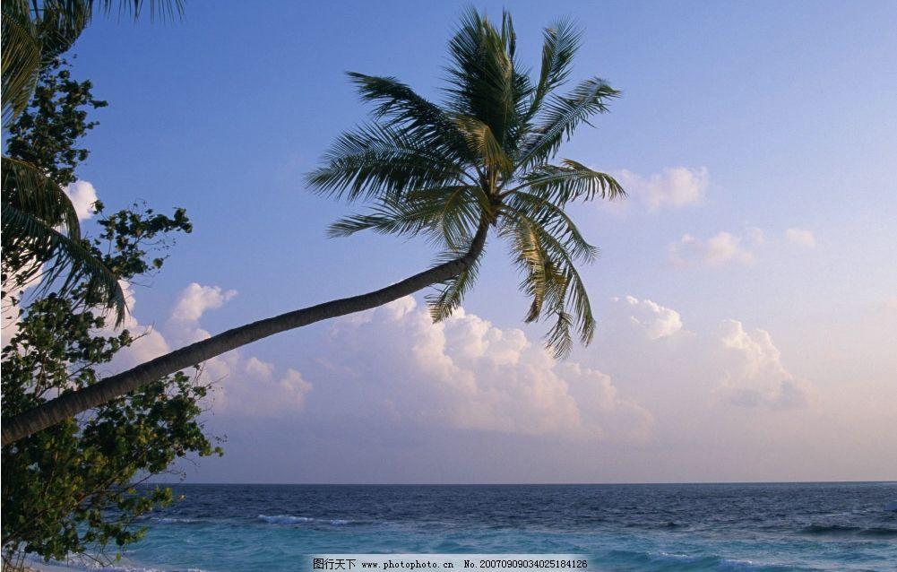海边的椰子树 椰子树 海滩 沙滩 大海 海洋 海水 大海图片 大海的图片