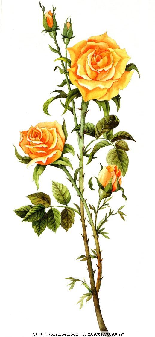 设计图库 设计元素 装饰图案  玫瑰花枝叶 小花朵 韩国花纹psd素材 花