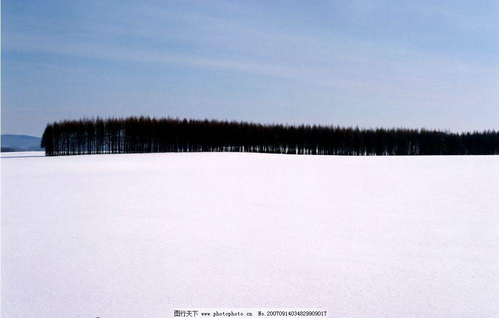阳光雪地树林图片