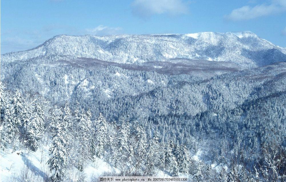 森林雪景图片