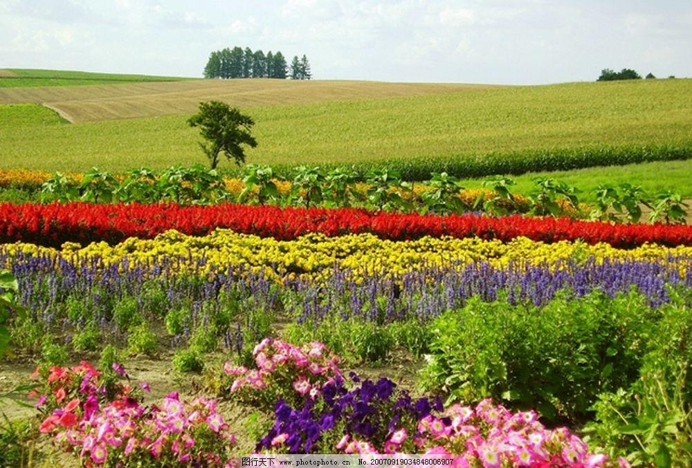 花田 田园 自然景观 自然风景 绿意盎然 摄影图库   314 jpg