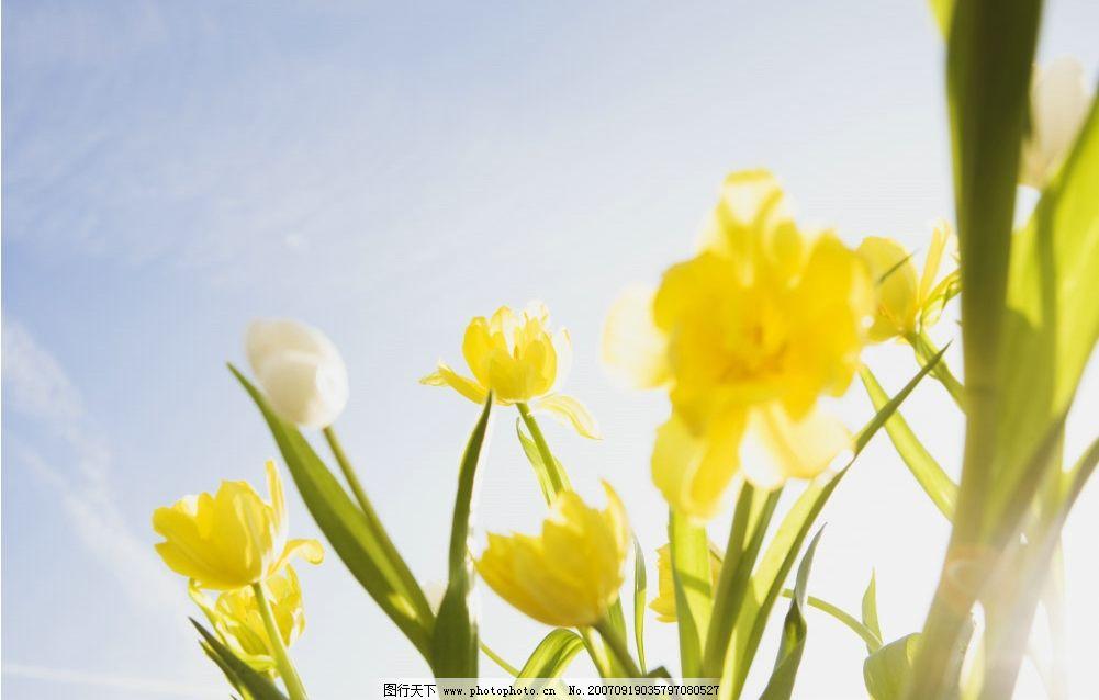 花朵 超清晰 桌面 壁纸 生物世界 花草 摄影图库