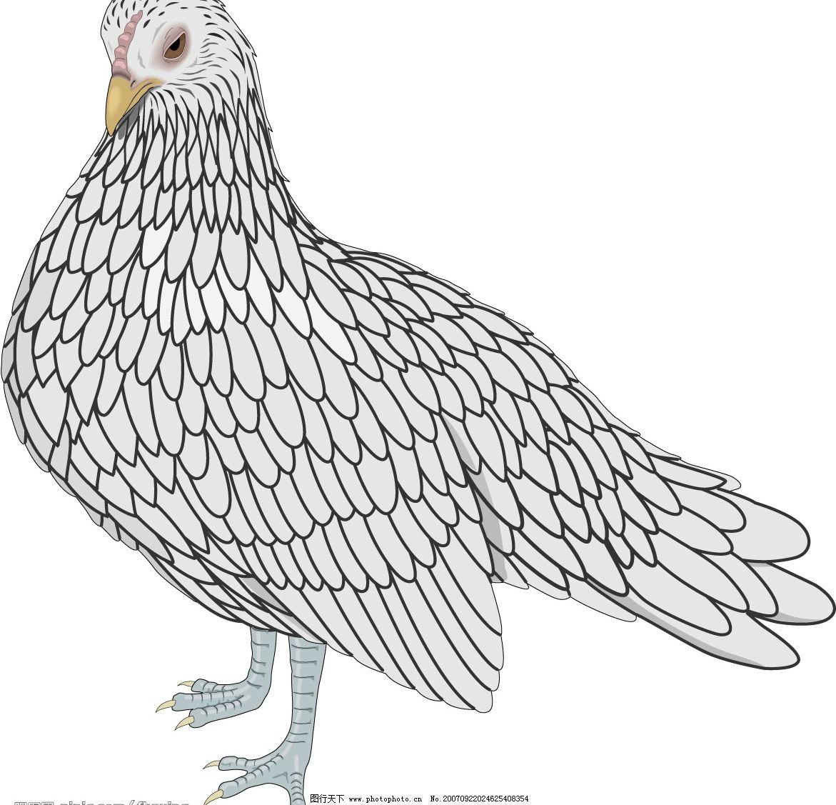 和平鸽 矢量雀鸟10 生物世界 鸟类 矢量鸟类 矢量图库   ai