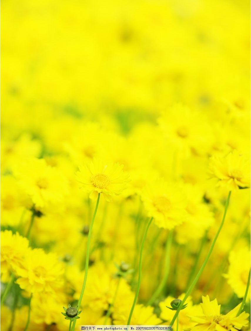 花朵 超清晰 桌面 壁纸 摄影图库