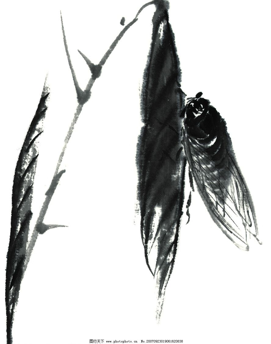 幼儿园绘画蝉