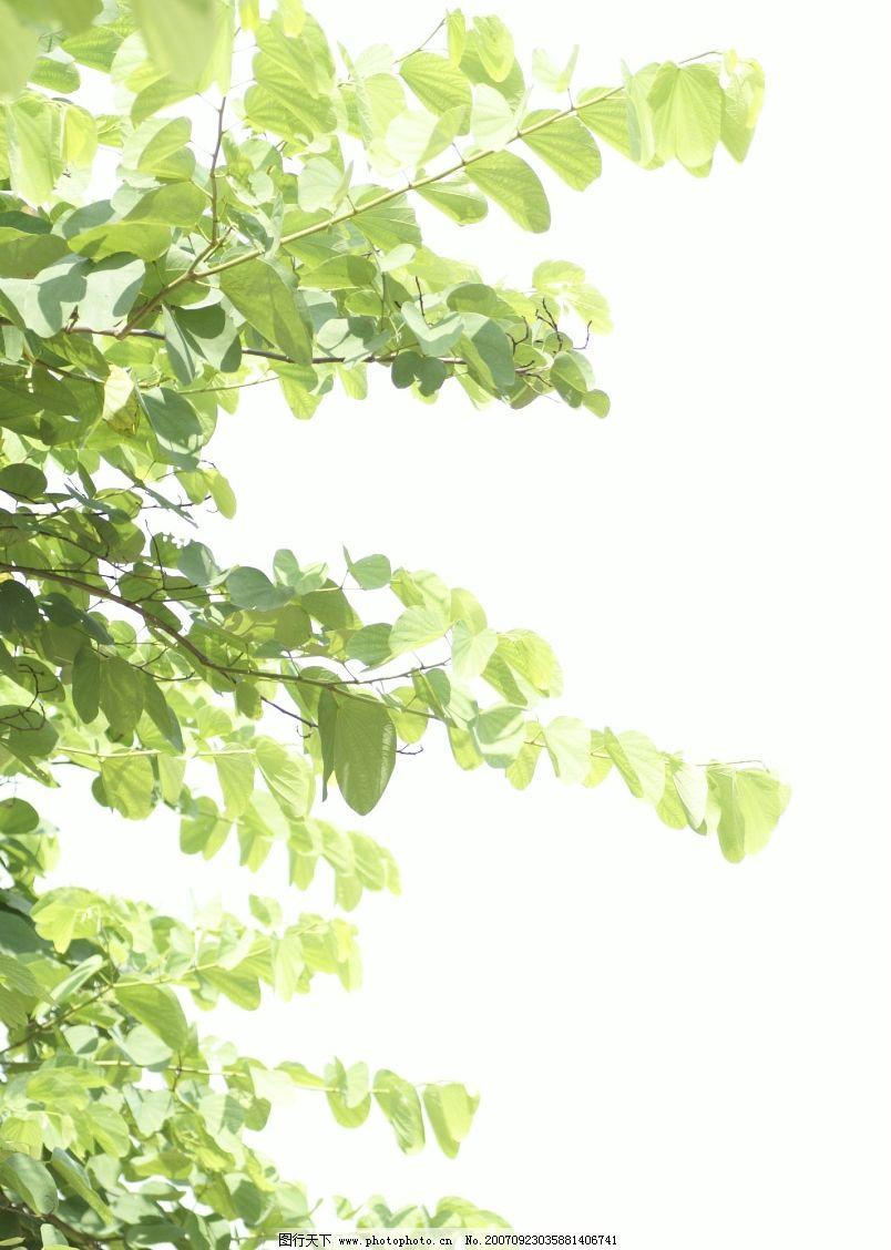 背景 壁纸 绿色 绿叶 设计 矢量 矢量图 树叶 素材 植物 桌面 804