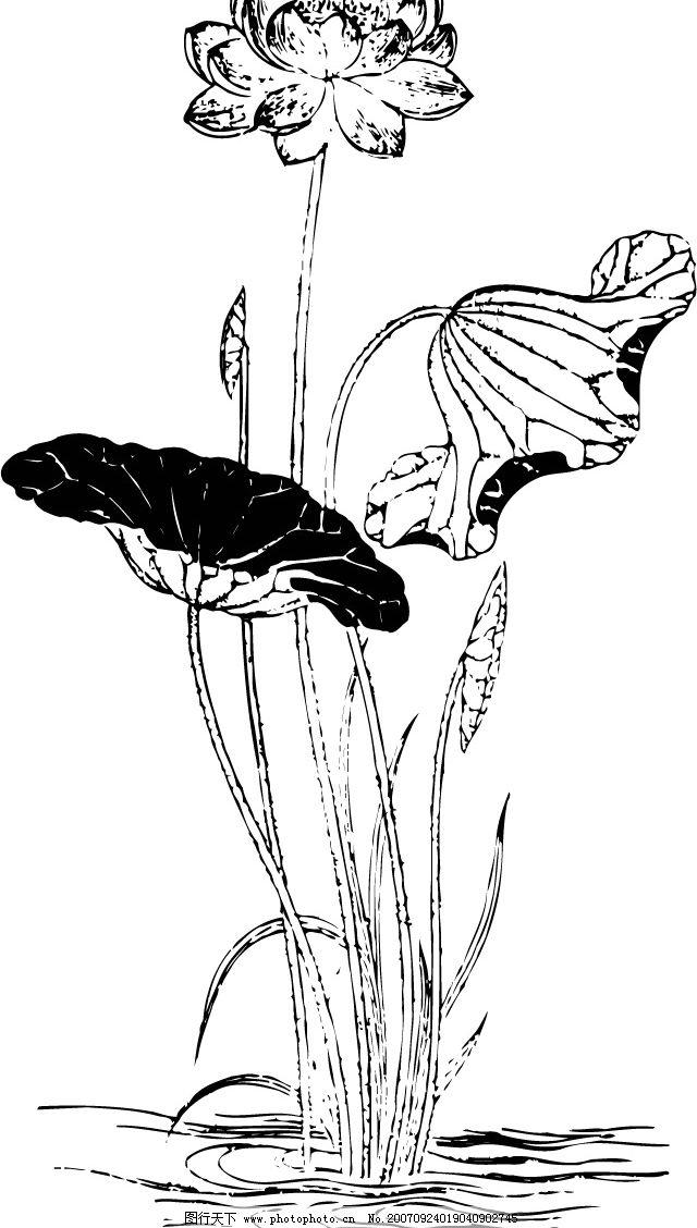 简单莲花手绘画
