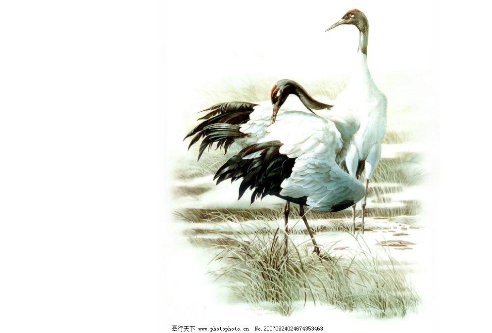 手绘鸟禽图片
