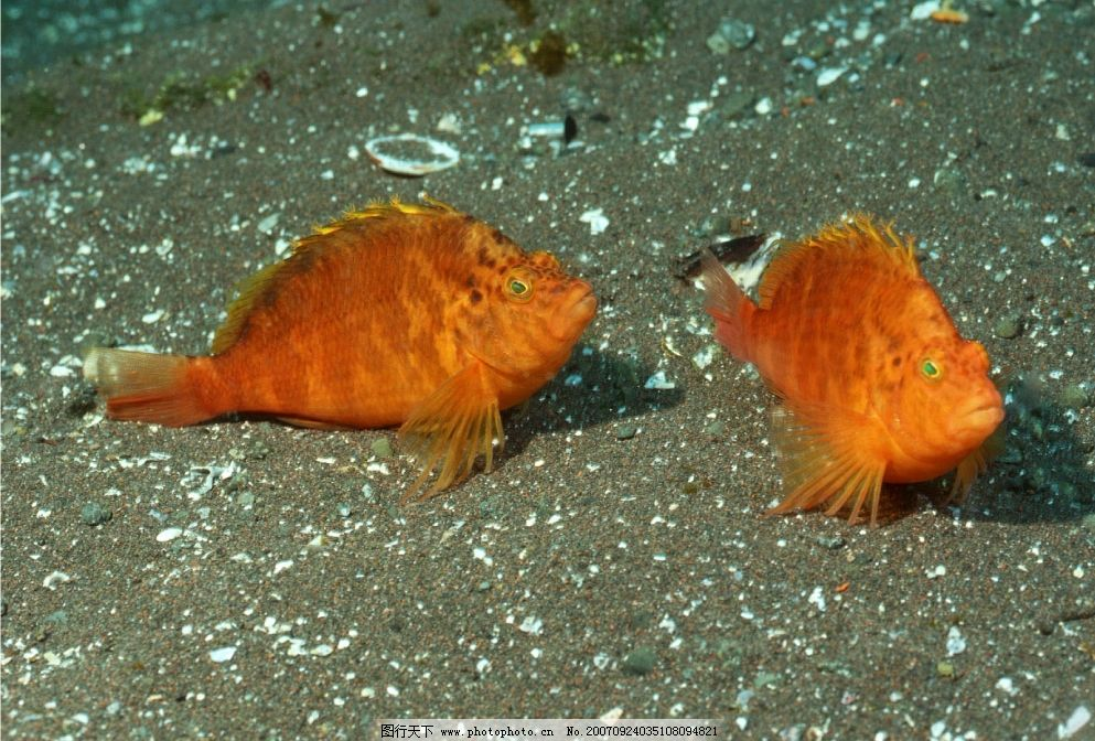 海里的鱼图片