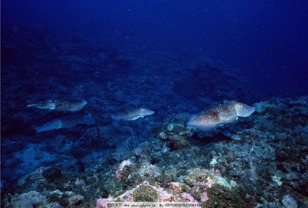 海里的鱼 海洋 大海 海底 生物世界 海洋生物 摄影图库