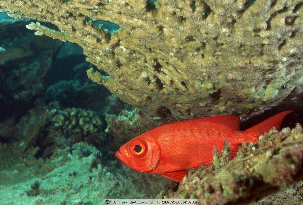 海里的鱼 海洋 大海 海底 海 生物世界 海洋生物 摄影图库   350 jpg