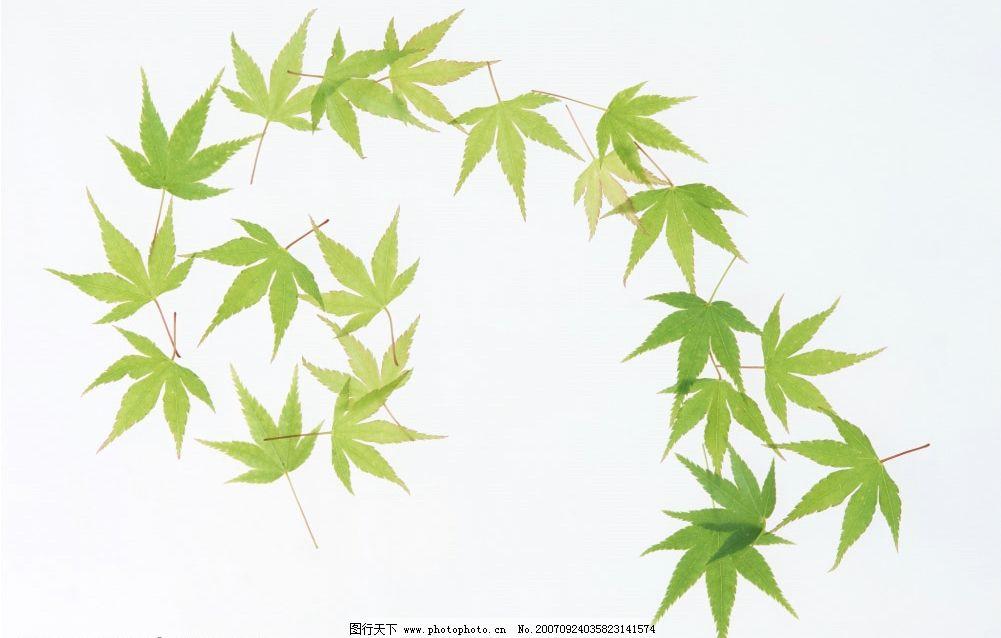 绿叶 叶子 植物 叶片 树叶 生物世界 树木 摄影图库   350 jpg
