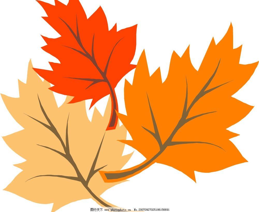 秋天枫叶-落叶图片