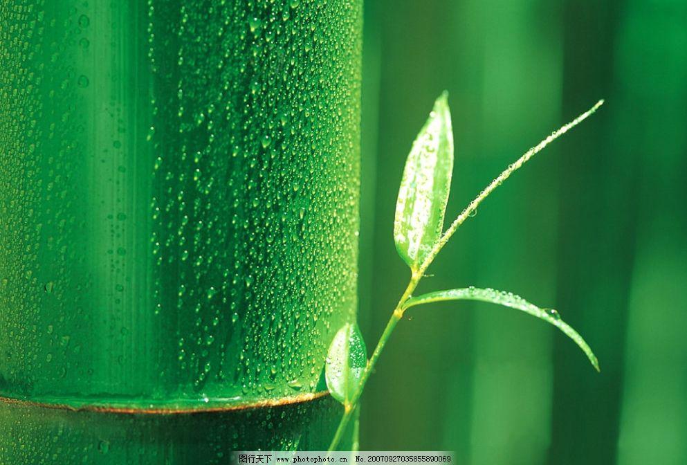 竹子图片_树木树叶_生物世界_图行天下图库