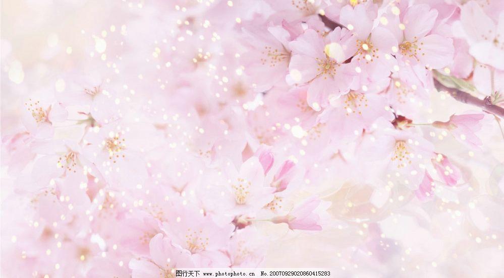 梦幻花卉 溶图 壁纸 其他素材
